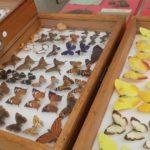 As borboletas voam de novo e a Brotéria quer cruzar cultura e fé no Bairro Alto