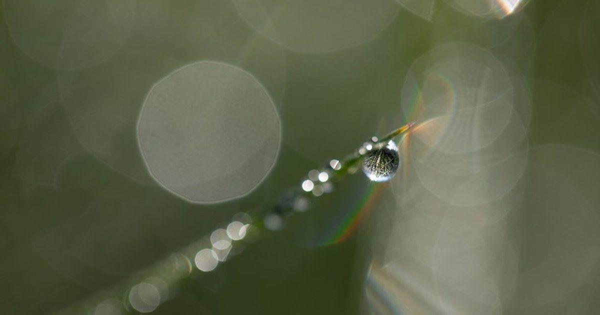 Gota de água. Beatriz Sobral