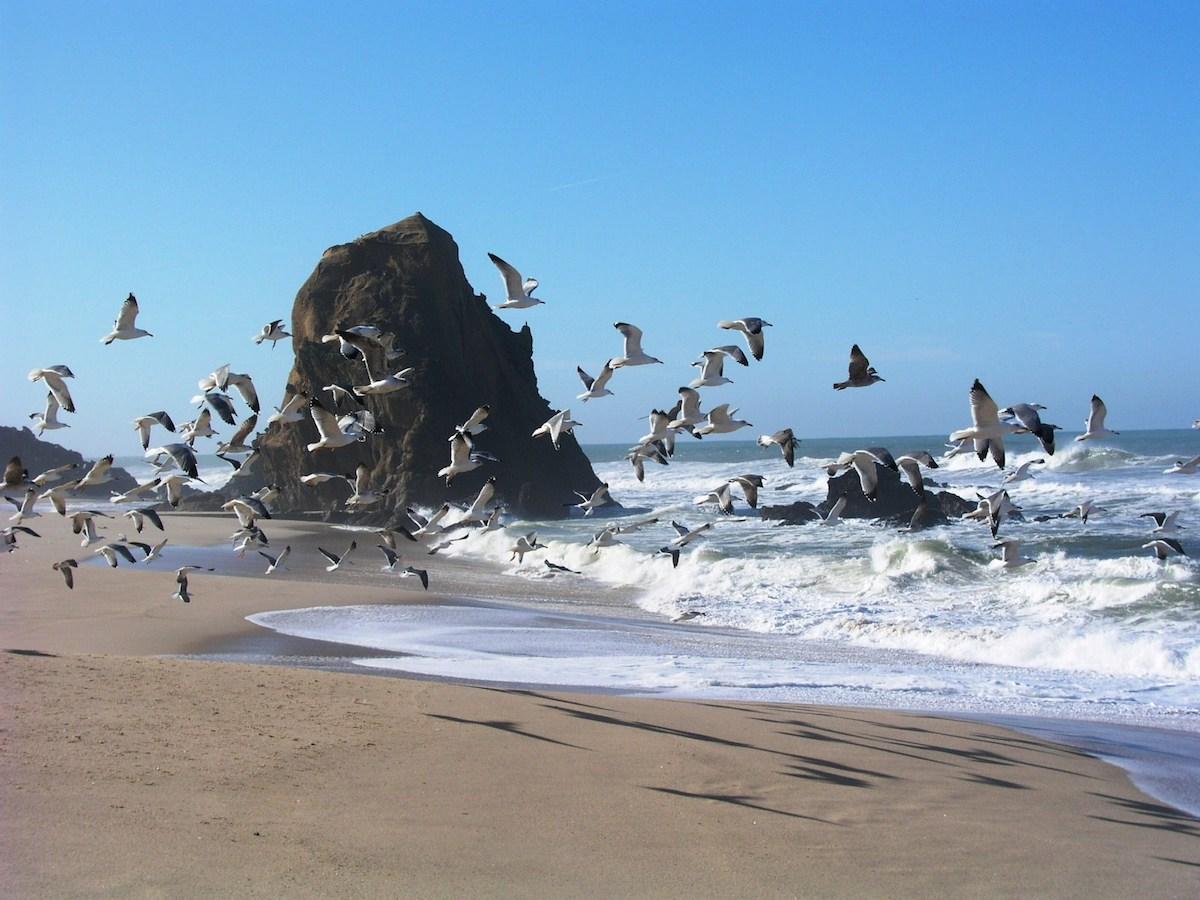 A beleza do que podemos fazer juntos. Aves. Praia. Pedra.