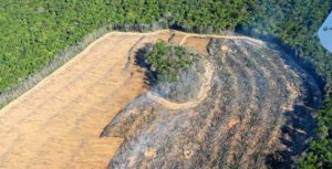 Desmatamento Amazónia.900km a sudeste de Manaus-2 - cópia
