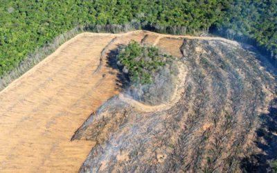 Desflorestação da Amazónia bate recordes durante confinamento