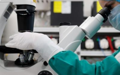 Igreja Católica contesta alteração da lei de biotecnologia na Noruega