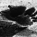 Profecia aos cristãos (poema livremente inspirado nas palavras de Martin Niemöller)