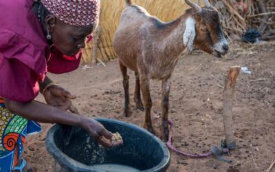 """Burkina Faso: """"Crise esquecida"""" coloca 2,2 milhões de pessoas em risco de morrer à fome"""