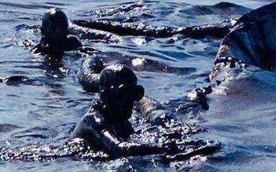 Cardeal das Maurícias elogia resposta da população ao derrame petrolífero