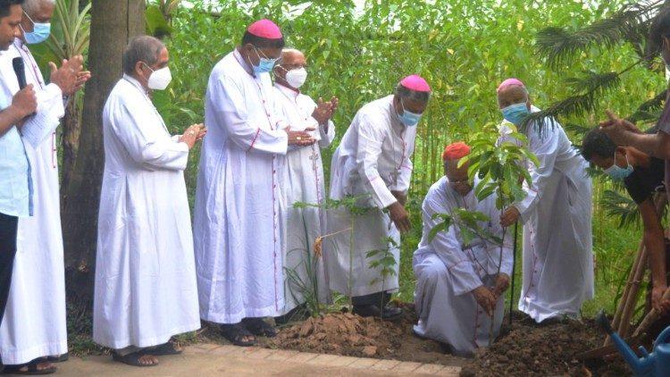 ambiente. ecologia. bangladesh. árvores