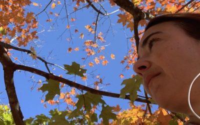 Outono em Washington DC: cores quentes, cidade segregada