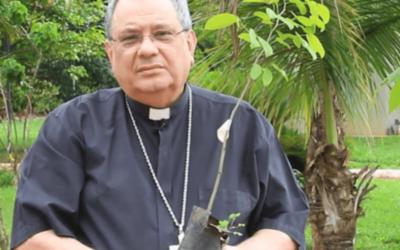 Bispos do Brasil sugerem plantar uma árvore como forma de rezar pelos mortos e cuidar da casa comum