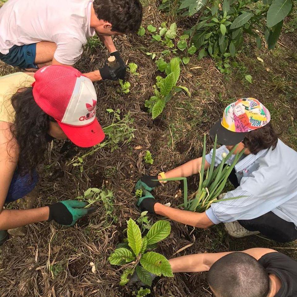 Bela Flor Respira-Agrofloresta de Campolide-2