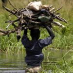 Alterações climáticas: ONG portuguesas reclamam ação enérgica de António Costa