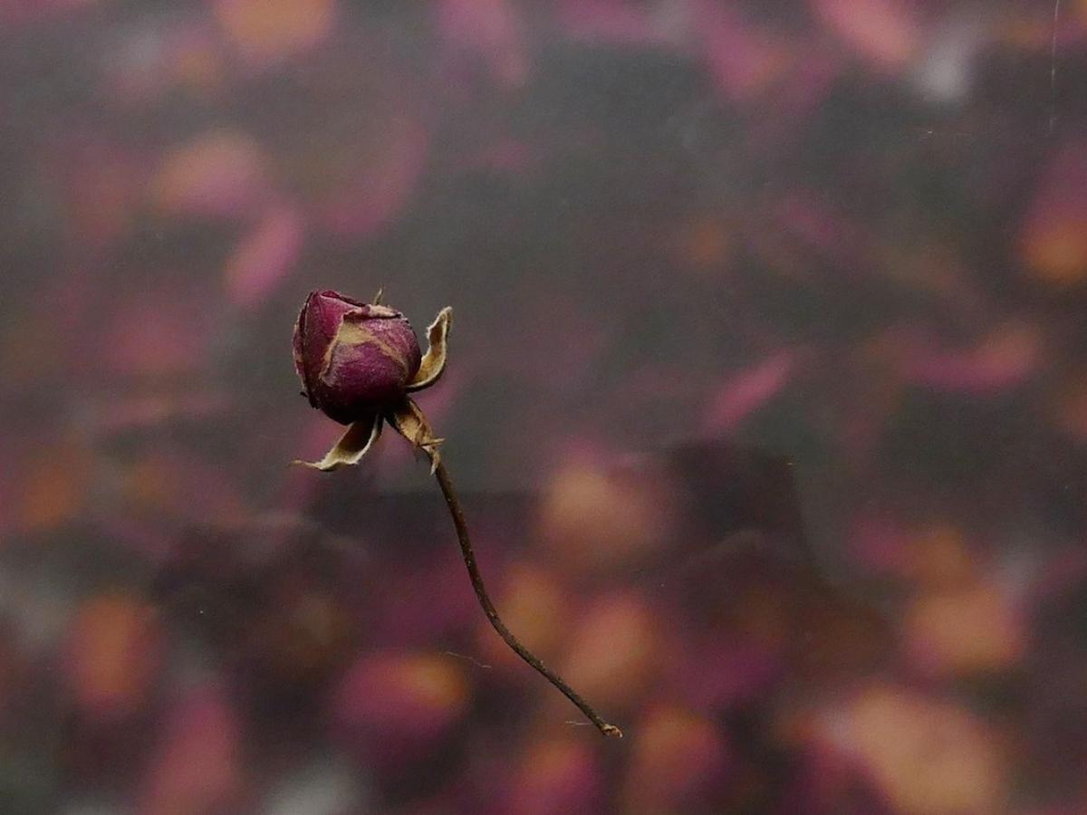 Flor seca luto morte © Miguel Veiga