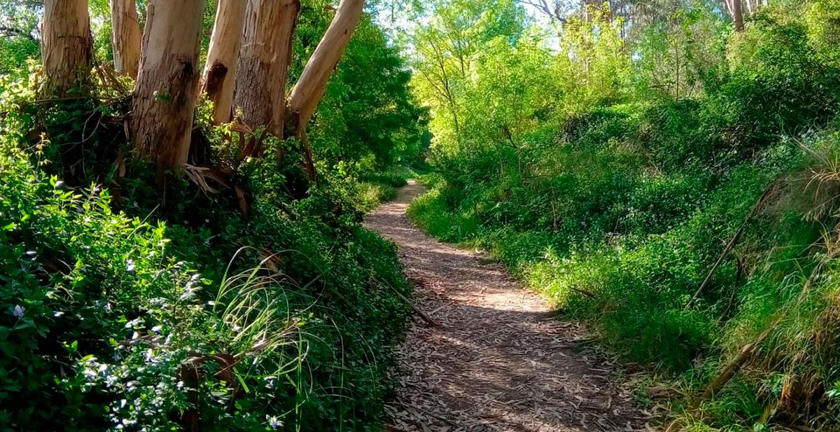 Caminho, bosque