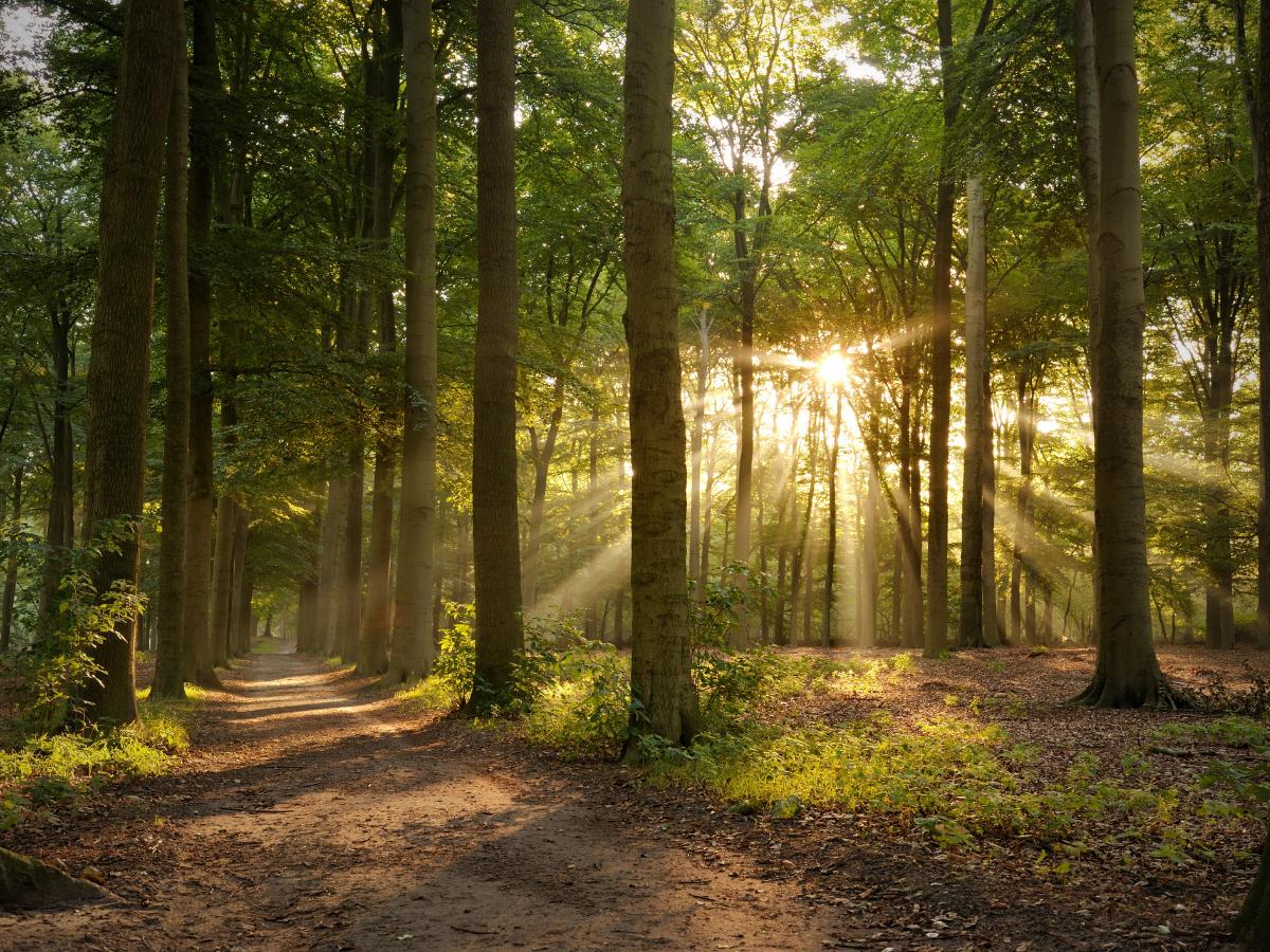 floresta co2 clima ambiente Foto Direitos Reservados