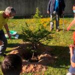 Dia do Ambiente assinalado com plantação de cedro do Líbano