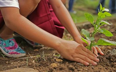 Católicos plantam um milhão de árvores no espírito da Laudato Si'