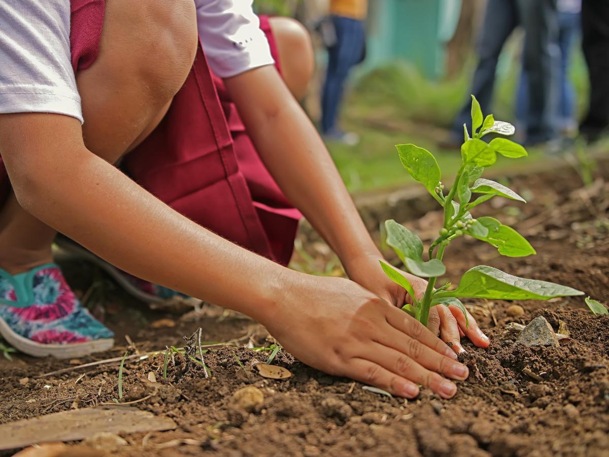 plantar árvore foto pixabay