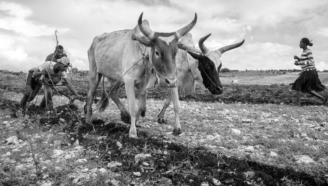 Seca deixa um milhão à fome em Madagáscar
